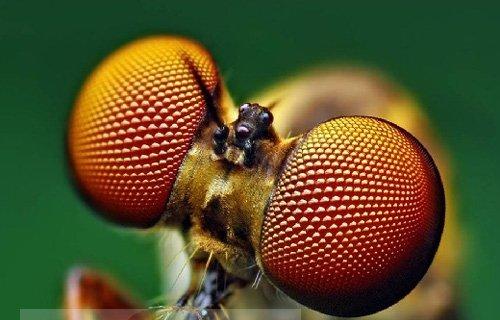 Земляная муха - борьба