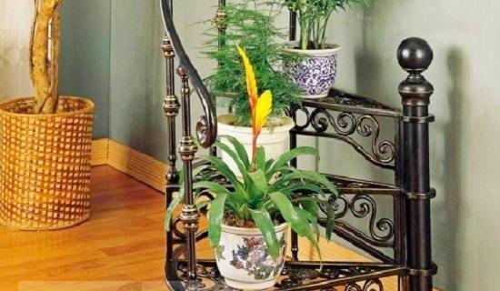 Мухи в цветочных горшках - как избавиться?