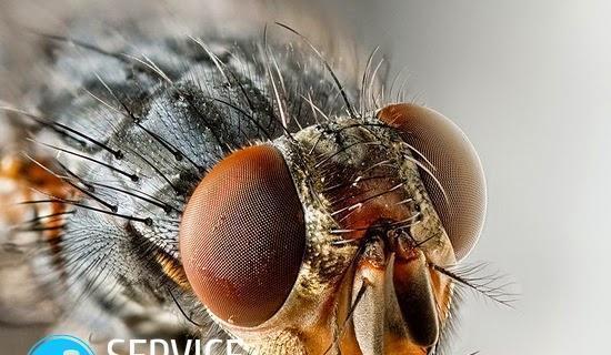 Малиновая муха - борьба с ней
