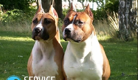 Средства защиты от собак