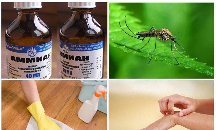 ammiak-komary