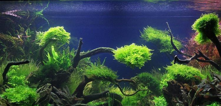 aquascaping-art-of-the-planted-aquarium-adrie-01-3-2