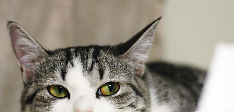 thinking-cat