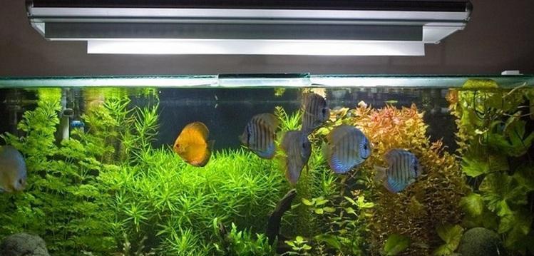 kachestvennoe-osveshhenie-akvariuma-www-ural-org