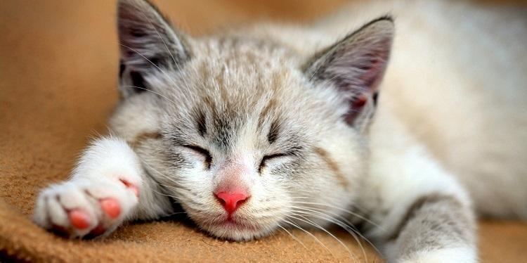 rabstol_net_cats_48