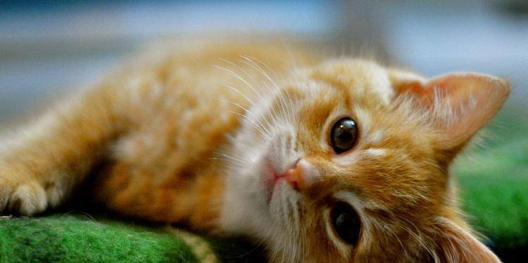 red-cats-10_jillhudgins_nc