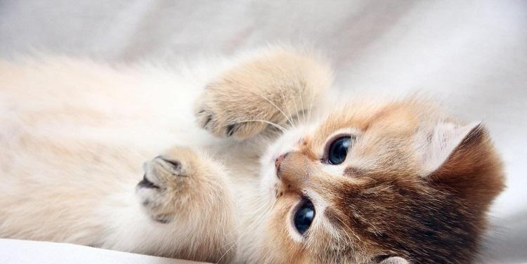 wpid-kot_kotenok_milyj_lapa