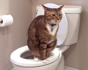 У кота кал с кровью — что это значит?