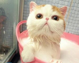 Как помыть кота если он боится воды и царапается?