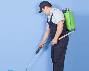 Как избавиться от прусаков раз и навсегда в домашних условиях?