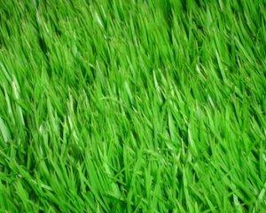 Как отстирать траву