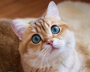 Как убрать запах мочи кота с пола?