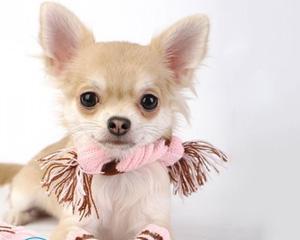Как сшить комбинезон для собаки?