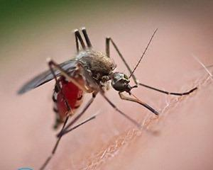 Защита от комаров