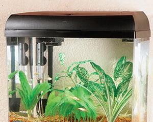 Как очистить аквариум от известкового налета?