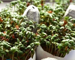 Лампы для выращивания растений в домашних условиях