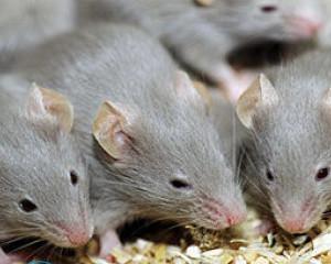 Отпугиватель мышей