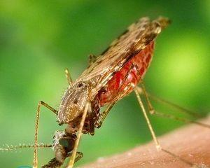 Средства от комаров в машину Средства от комаров в машину