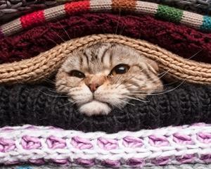 Как очистить одежду от шерсти кошки?