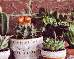 Мухи в цветочных горшках — как избавиться?