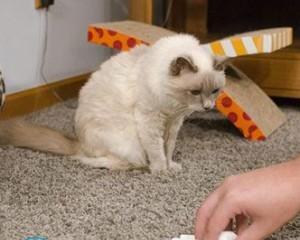 Как вывести запах кошачьей мочи?