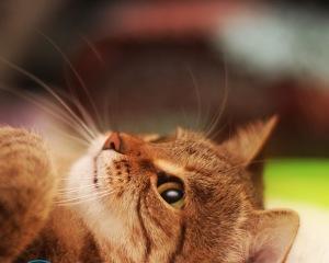 Кот пометил диван — как избавиться от запаха?