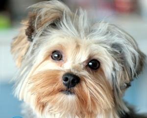 Как убрать запах собачьей мочи с ковра в домашних условиях?