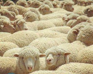 Можно ли стирать одеяло из овечьей шерсти в стиральной машине?