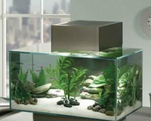 Как убрать зелень в аквариуме