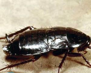 Средство от тараканов Комбат и Раптор — что лучше?