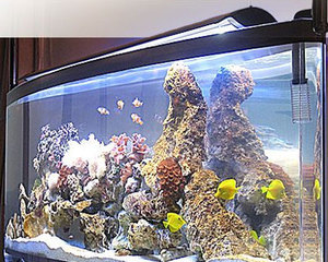 Черная плесень в аквариуме — как бороться