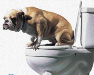 Как избавиться от запаха собачьей мочи?